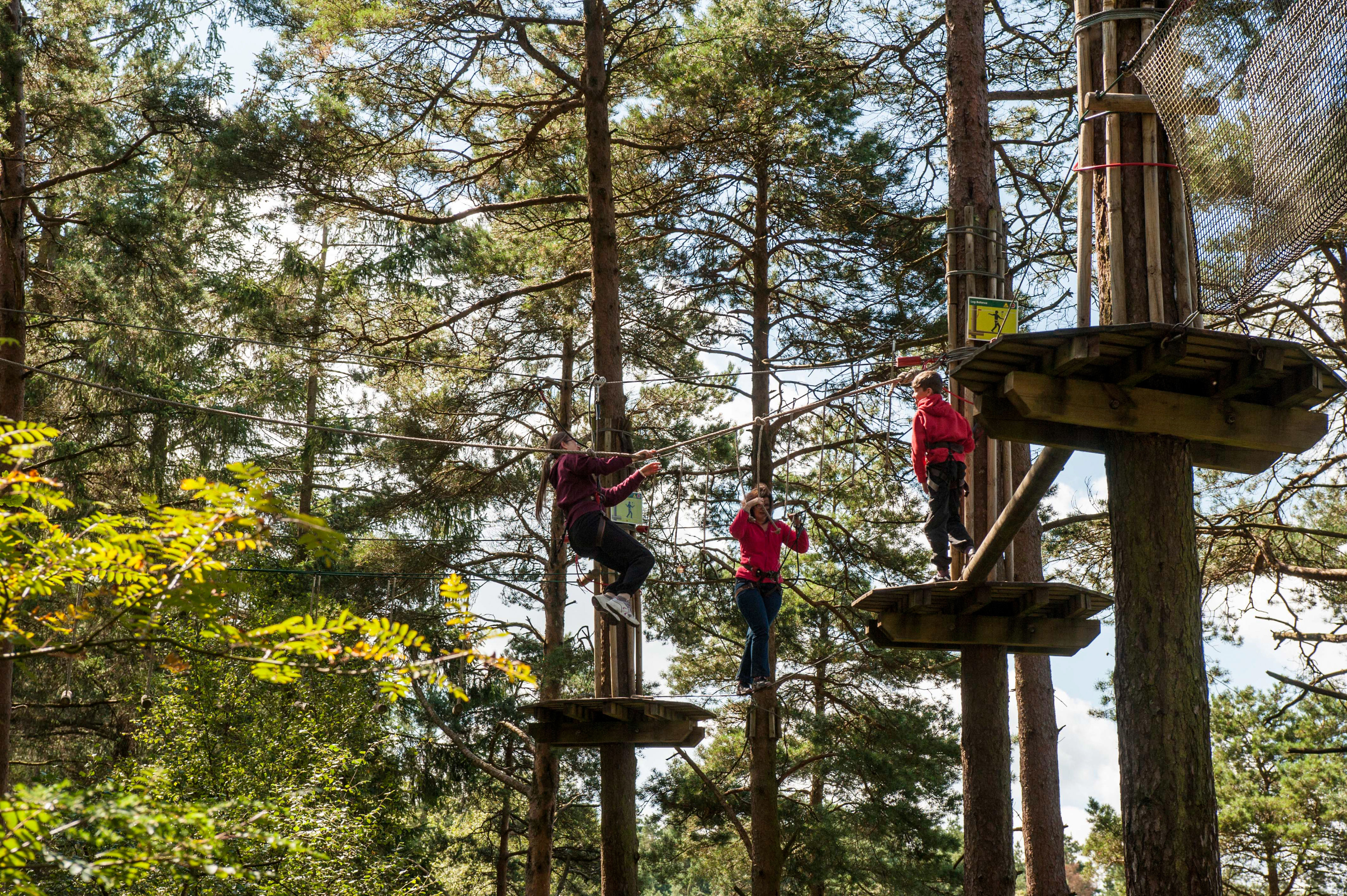 Go Ape Tree Top Adventure At Grizedale Forestry