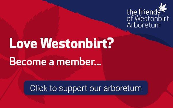 Westonbirt, The National Arboretum | Forestry England