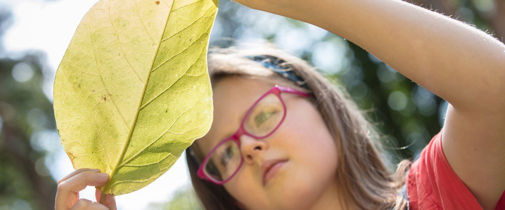 Looking closely at a leaf