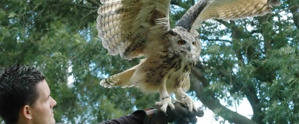Guisborough events  - European Eagle Owl