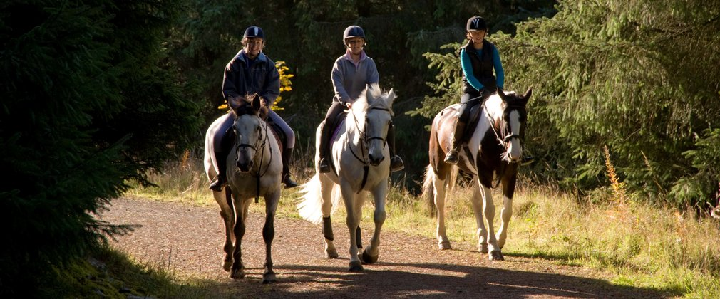 Horse riding at Whinlatter