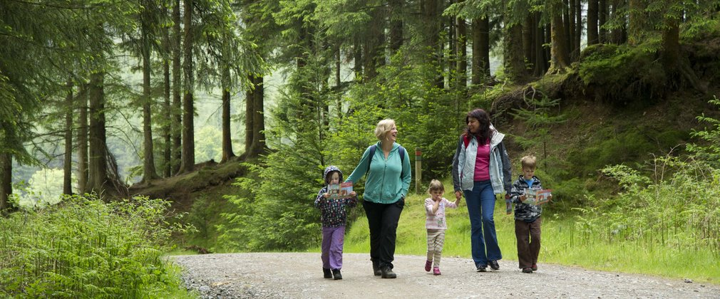 Whinlatter forest family walking
