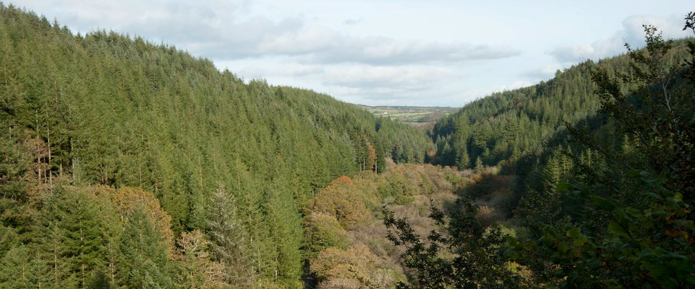 View over the valley and conifer forest