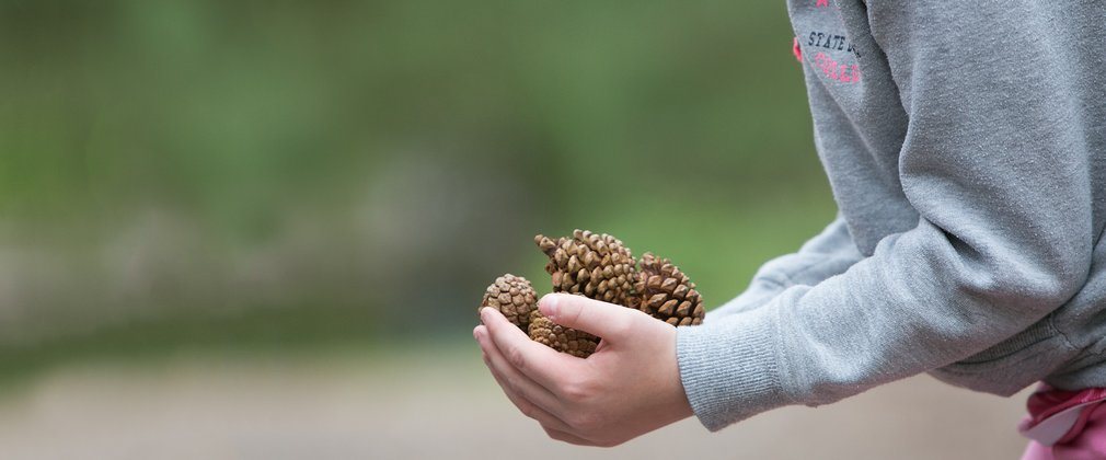 Child collecting fir cones in the forest