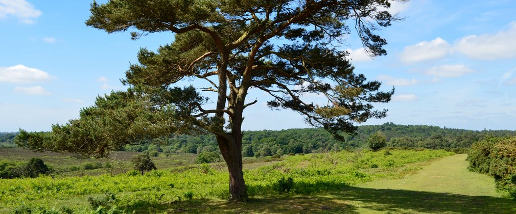 The open forest landscape within the New Forest National Park