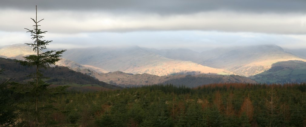 Grizedale landscape with views over the forest