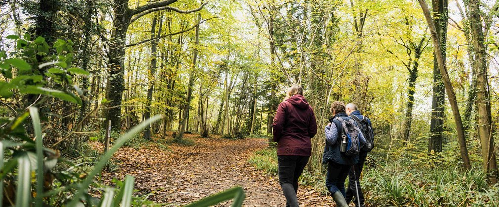 walkers enjoying a walk through nature in autumn