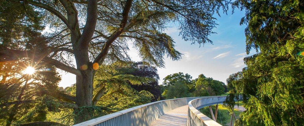 STIHL Treetop Walkway at Westonbirt Arboretum