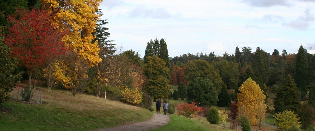 Bedgebury autumn colour