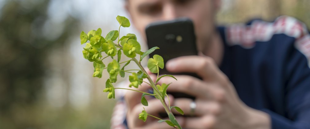 A man using the iNaturalist app