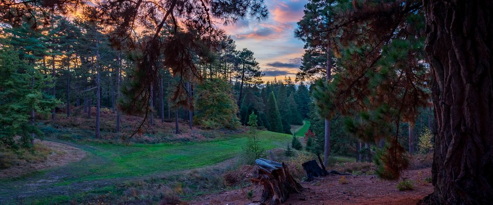 Bedgebury National Pinetum And Forest Forestry England