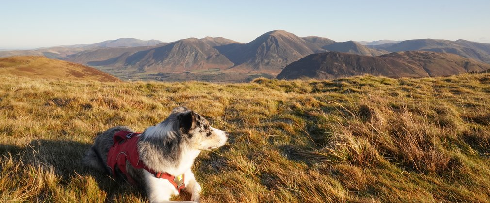 Dog looking out across sunny grass with mountains in background