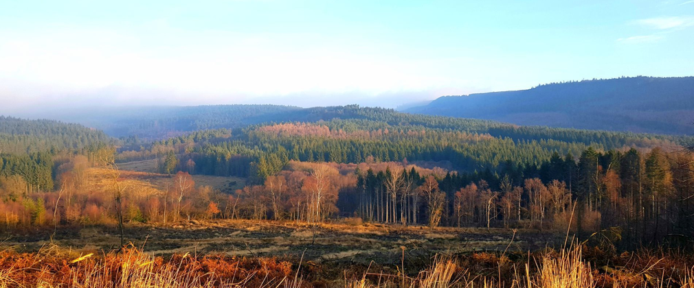 Dalby forest from afar with trees in autumn colour