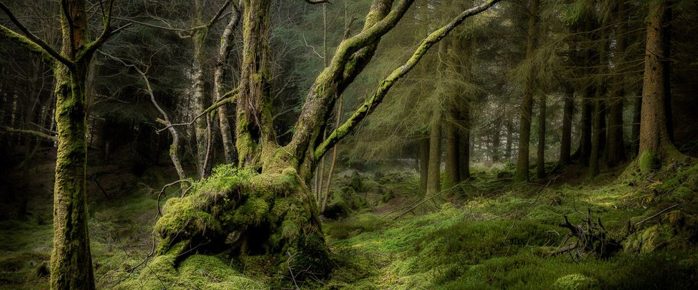 Shortlisted Earth Photo entry by David Rippin, 'Forest Depths' (2018)