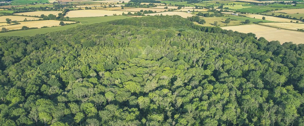 Photo is an area view of Silk Wood at Westonbirt, looking down at the lush green canopy of the ash woodlands.