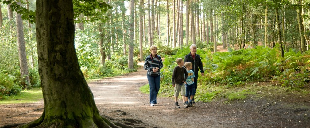 Family walking through Delamere forest