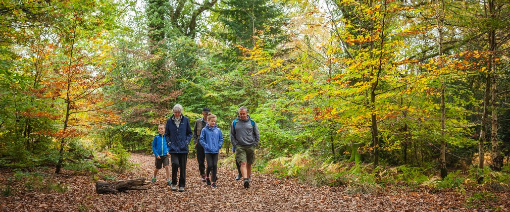 Family walking Forest of Dean generic