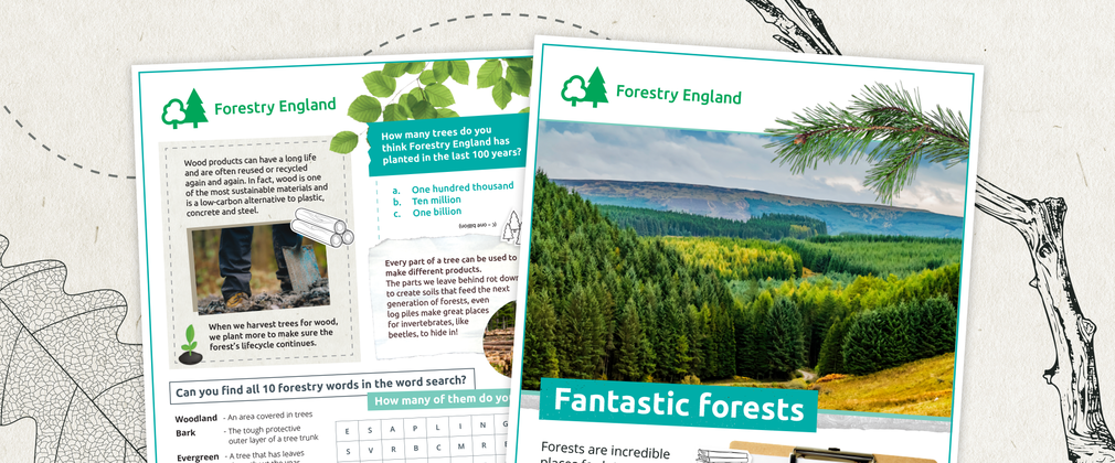 Fantastic forests activity sheet