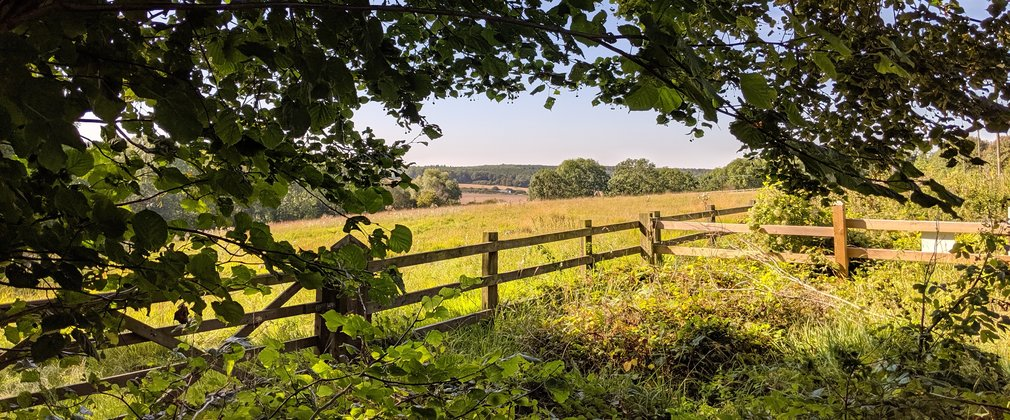 Wooden fence in front of fresh green field on sunny day
