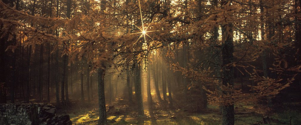 Sun shining through autumnal forest