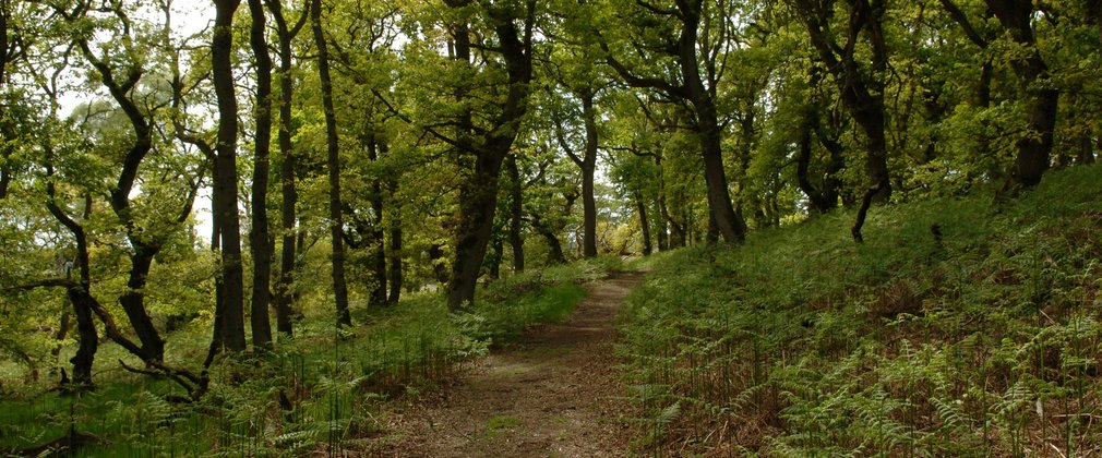 Narrow walking path through ancient woodland