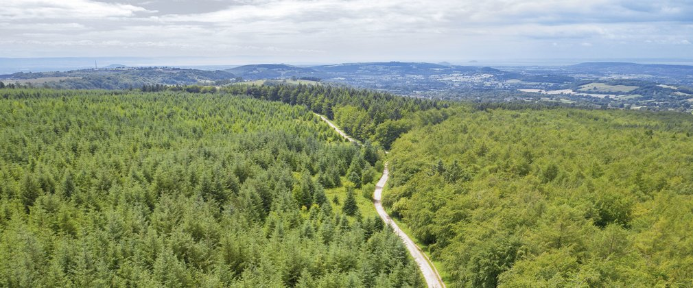 aerial view of forest with hills on the horizon