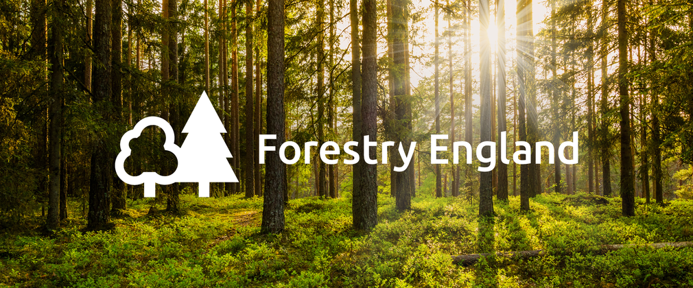 Forestry England logo sunset woodland