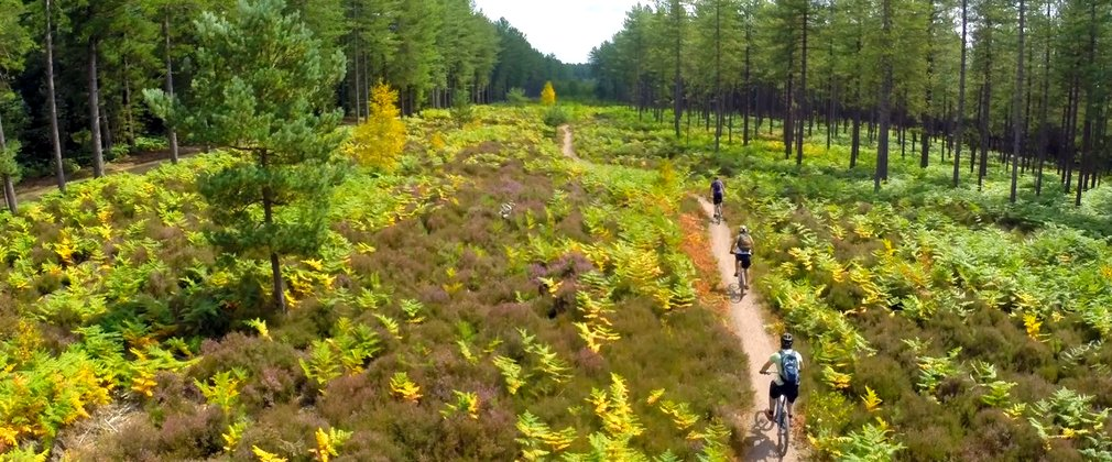 Cycling trails at Moors Valley