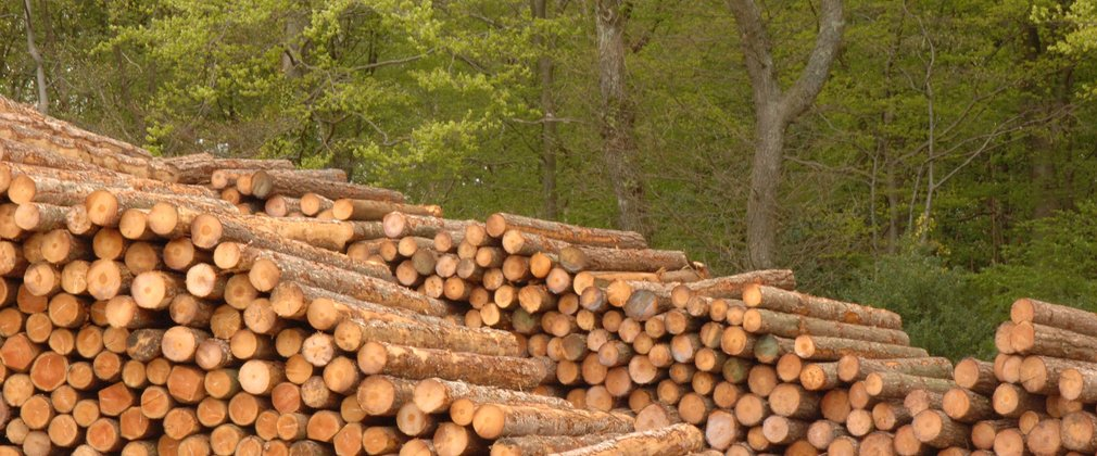 Timber stacked in piles in the Forest