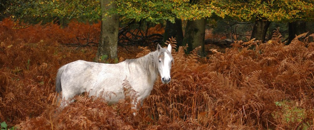 White pony within rust orange shrubs