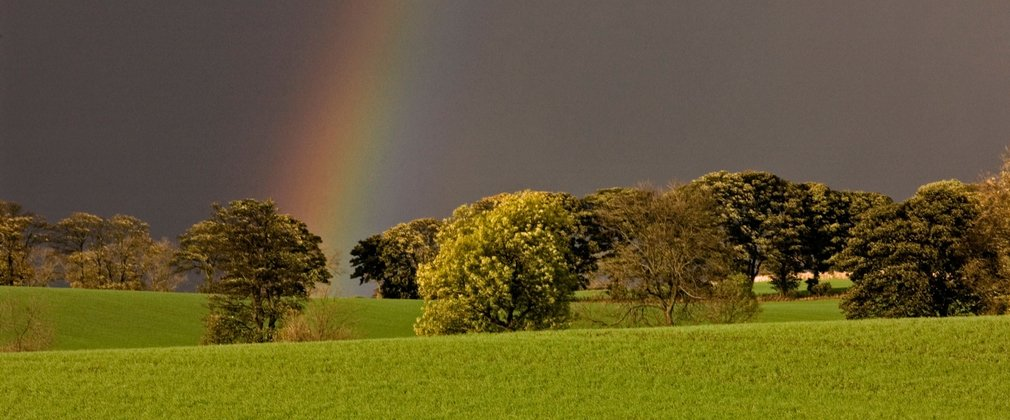 Dark skies brightened by a clear rainbow over green broadleaf trees