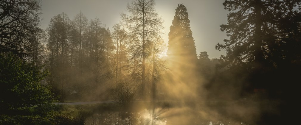 Bedgebury National Pinetum Dallimore Valley sunrise splitting the trees