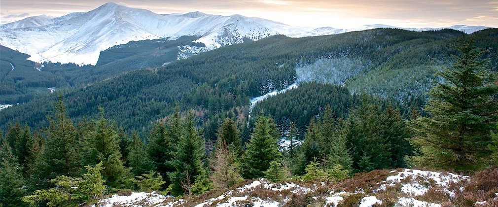 View across Whinlatter forest, mountains in the background and conifers in the foreground