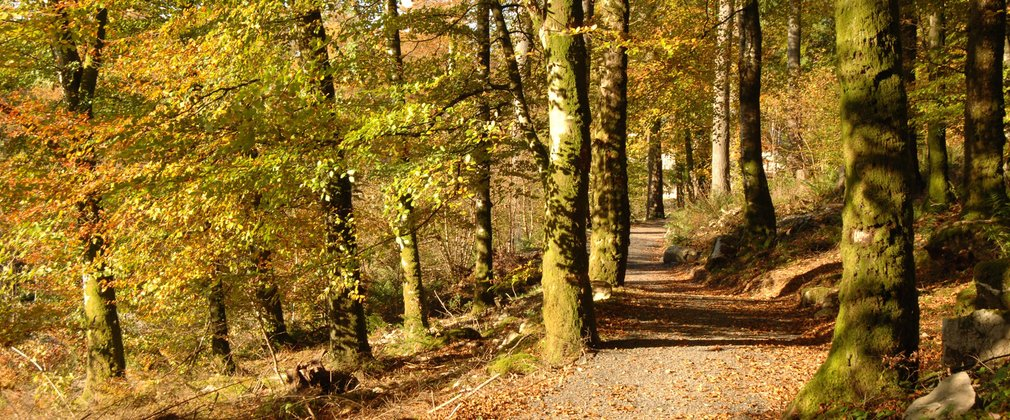 Walking path in autumnal forest
