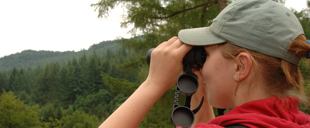 Bird watching in the forest