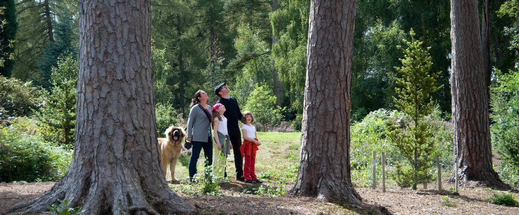 Family enjoying a woodland trail