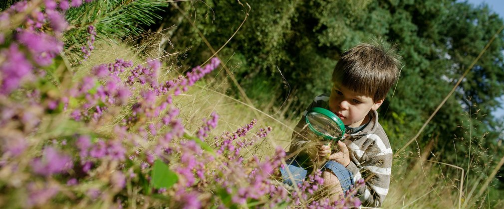 Child looking at bug through magnifying glass, near pink flowers