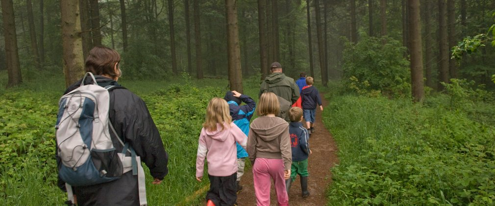 Group of school children walking through the misty forest