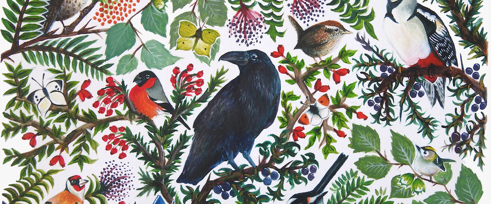 Life in the hedgerow illustration - Tiffany Francis