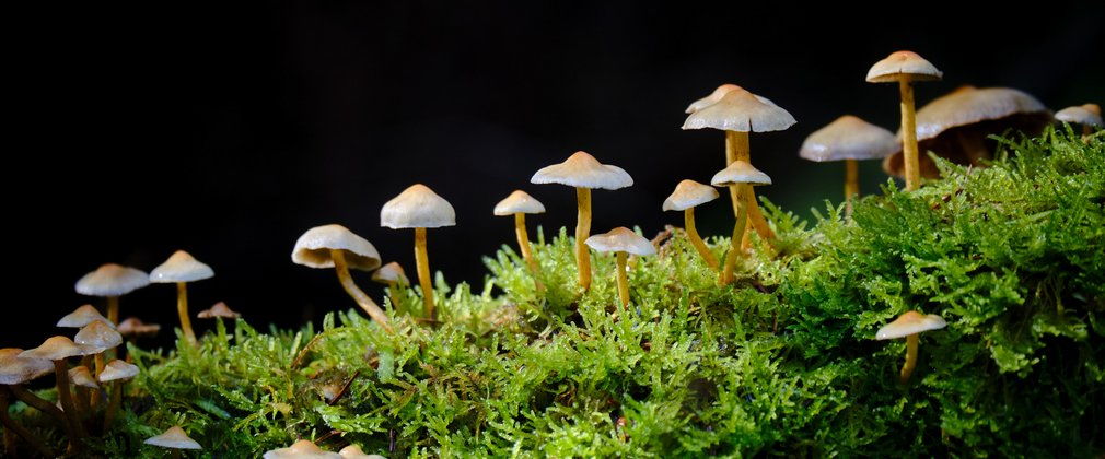 Mushrooms on mossy log in darkness