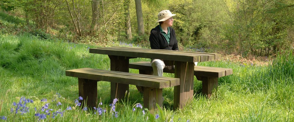 Picnic table within bluebells