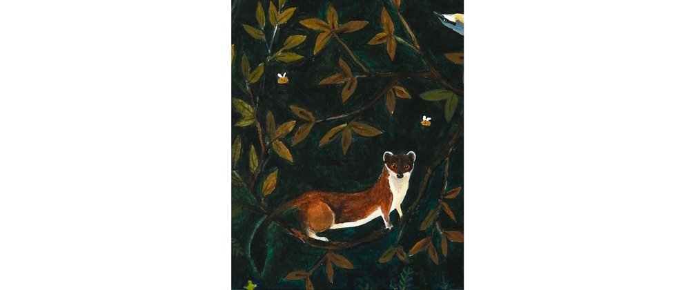 pine marten illustration