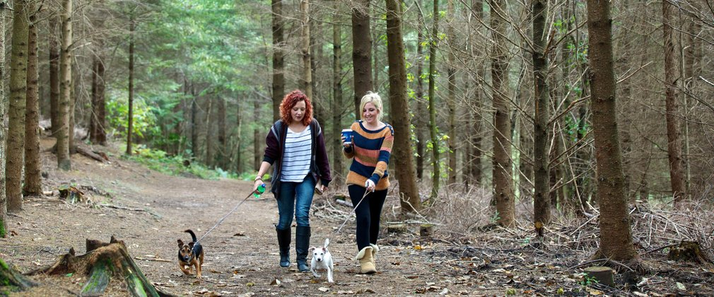 Two women with their dogs walking through a conifer forest