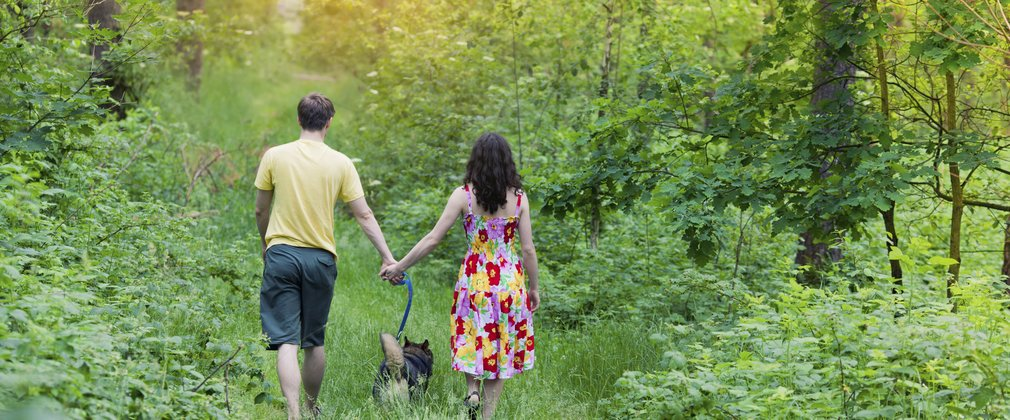 Couple with dog walking away through a forest clearing
