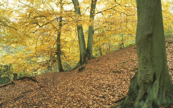 Sneaton Forest trees