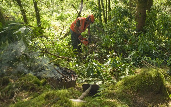 Person doing forest works