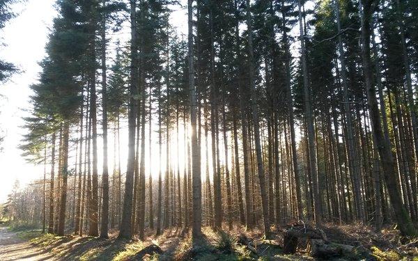 Tree Lore: Hazel