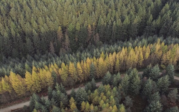 Forest from the sky
