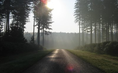 Sunrise in a conifer forest