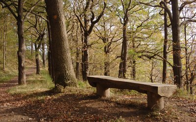 Chopwell Wood bench under trees